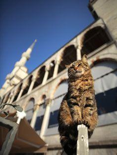 Abu Hurairah, al igual que el Profeta, sentía un gran amor por los gatos.